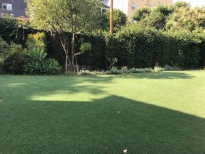 Dog Park | Parkview Living LA in Los Angeles CA